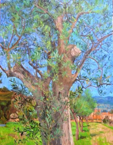 Olivier à la Peluade - huile sur toile - 65 x 50 cm - 2013